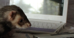 Feature Ferret